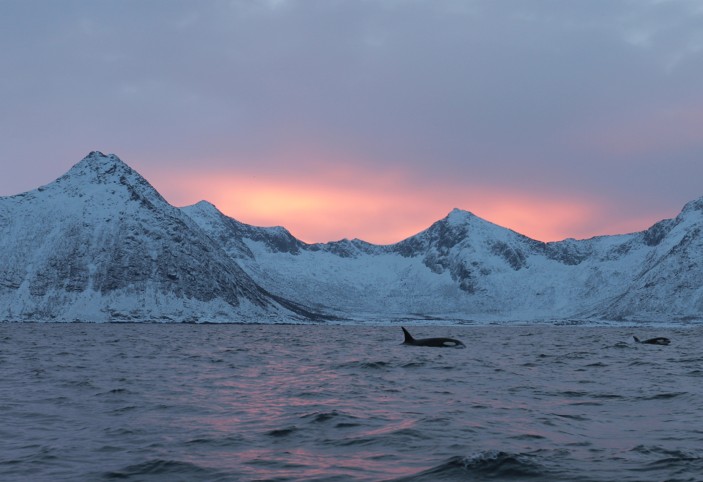 Whales in Norway