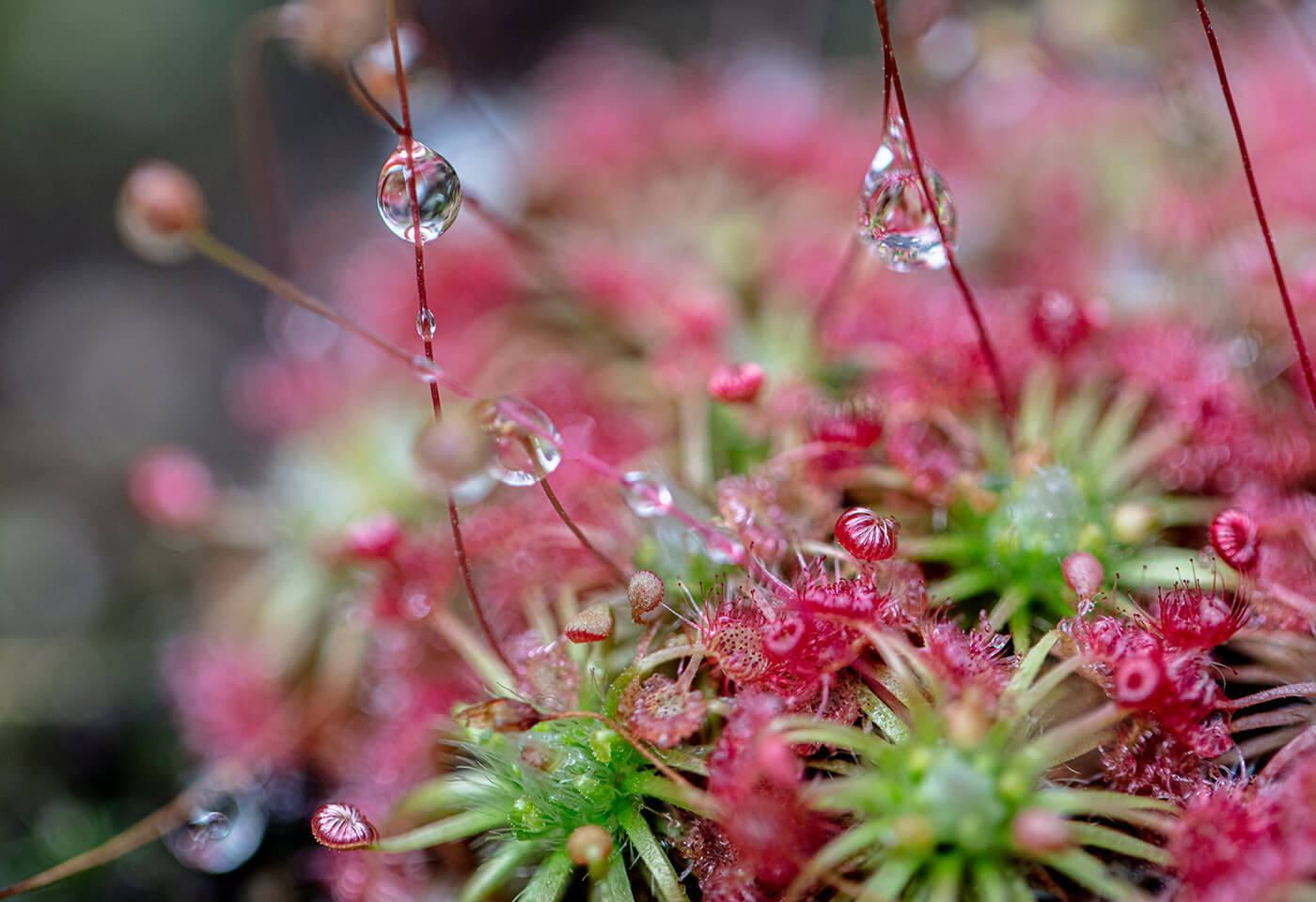Macro image of flower by Jenn Cooper