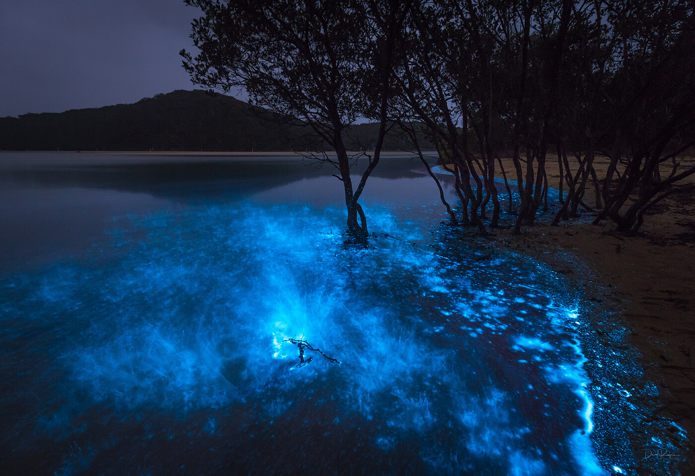 Bioluminescence Photography by David Rogers @davey_rogers
