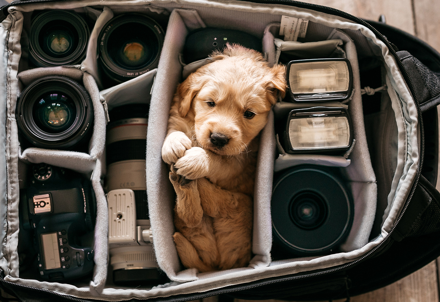 Portrait image of dog in camera bag
