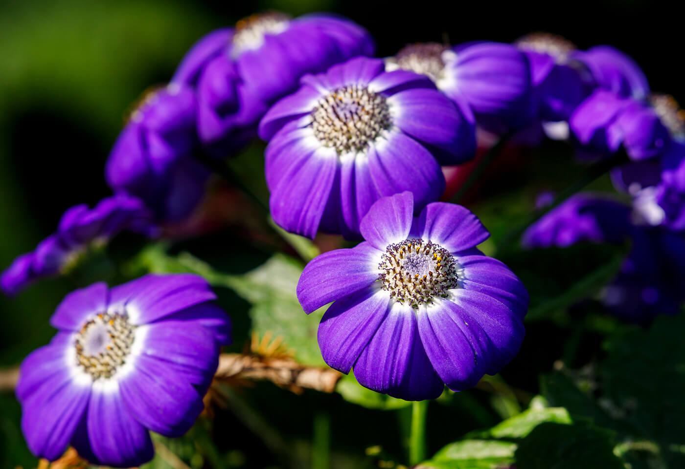 Close-up photo of purple flower in garden