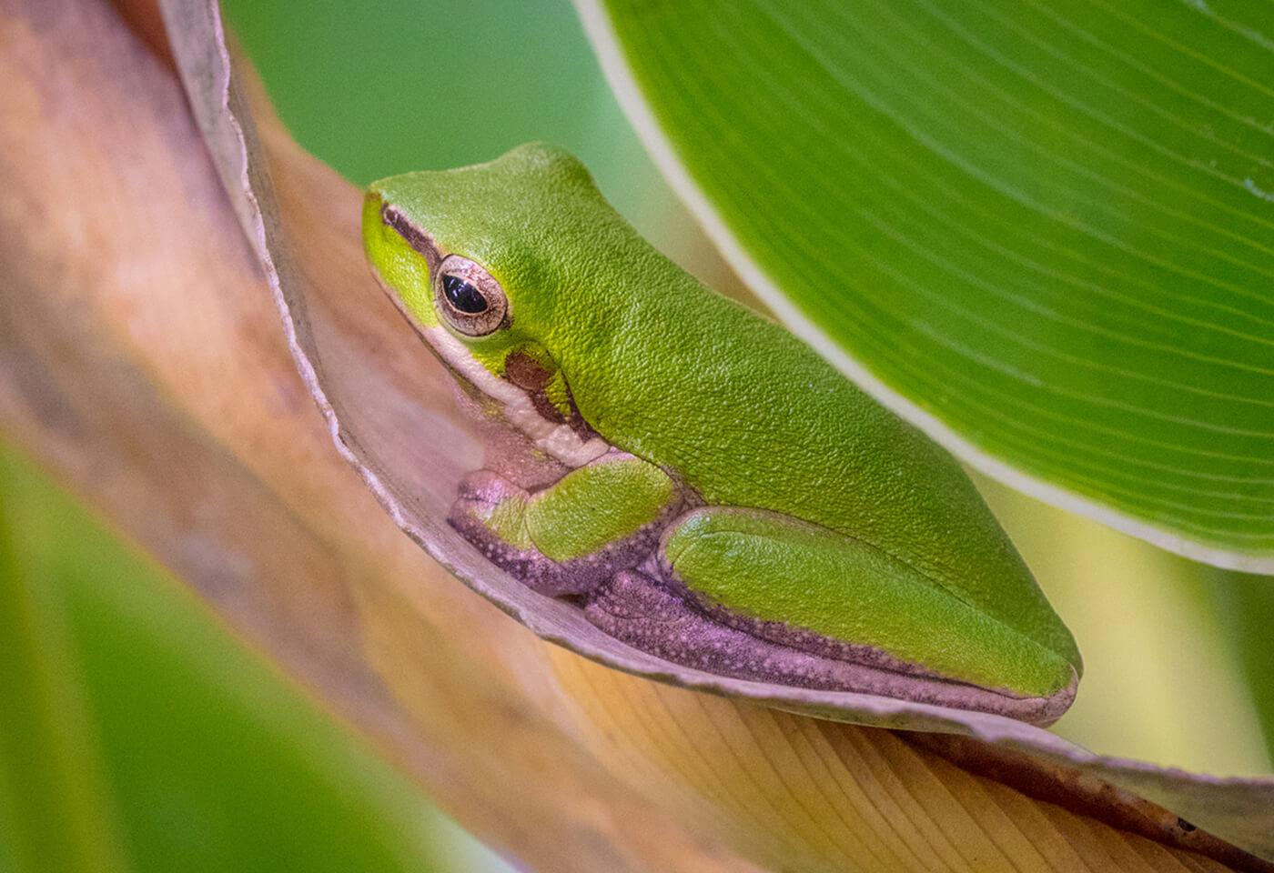 Macro image of a frog by Greg Sullavan