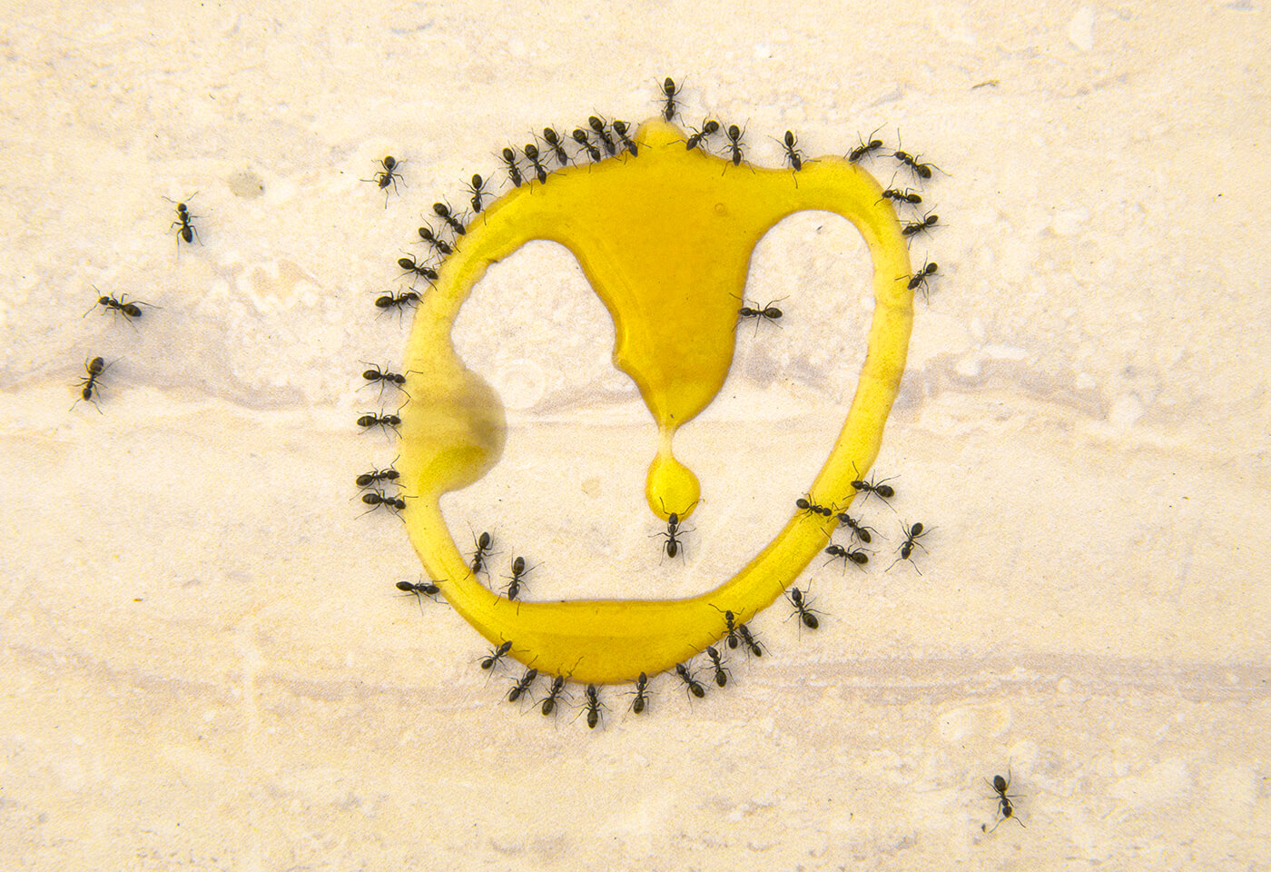 Ants around honey image by Irene Manion