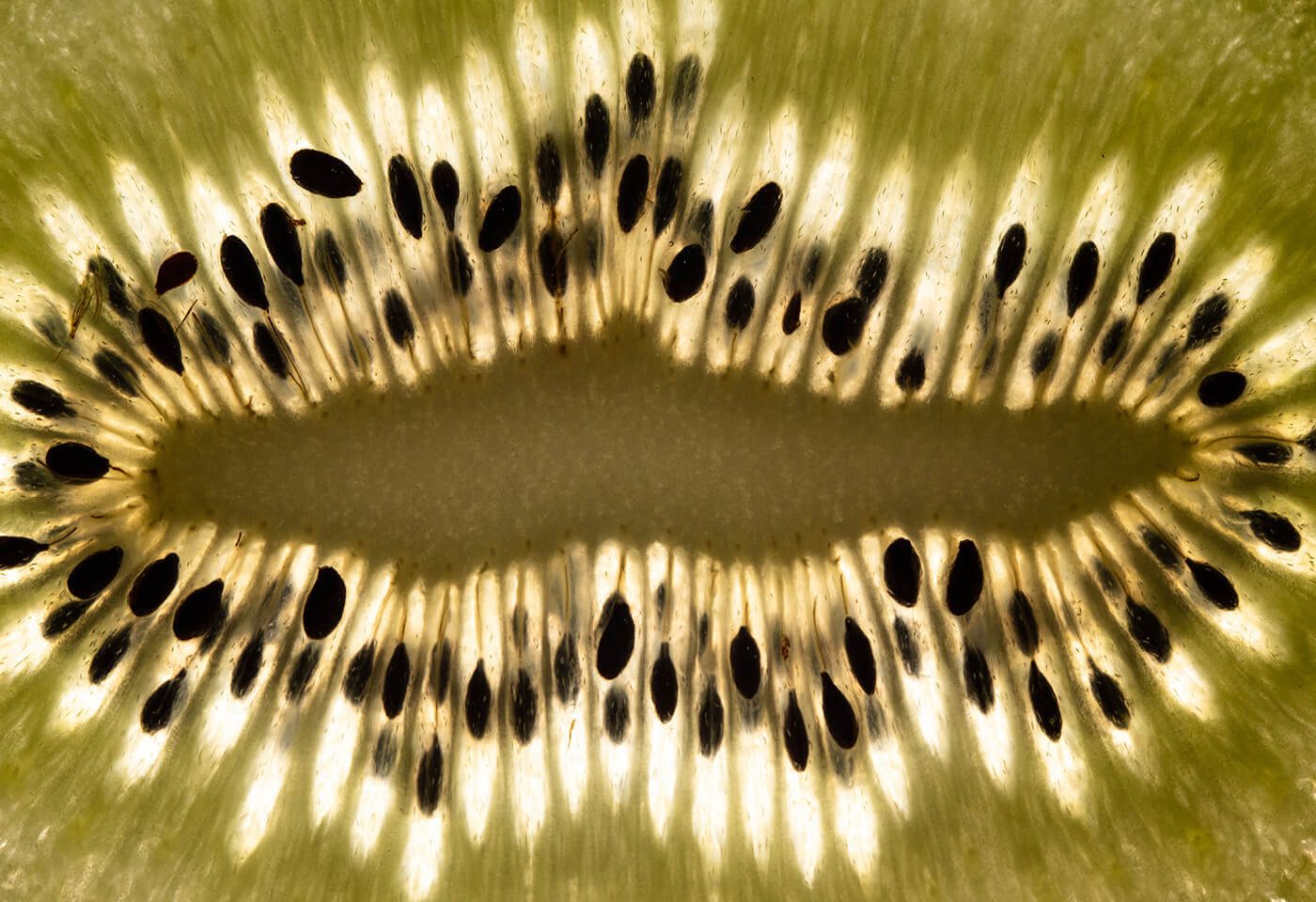 Macro image of a kiwi fruit