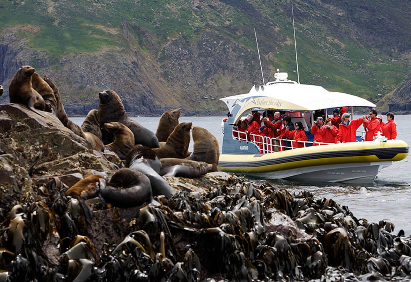 Landscape image of seals
