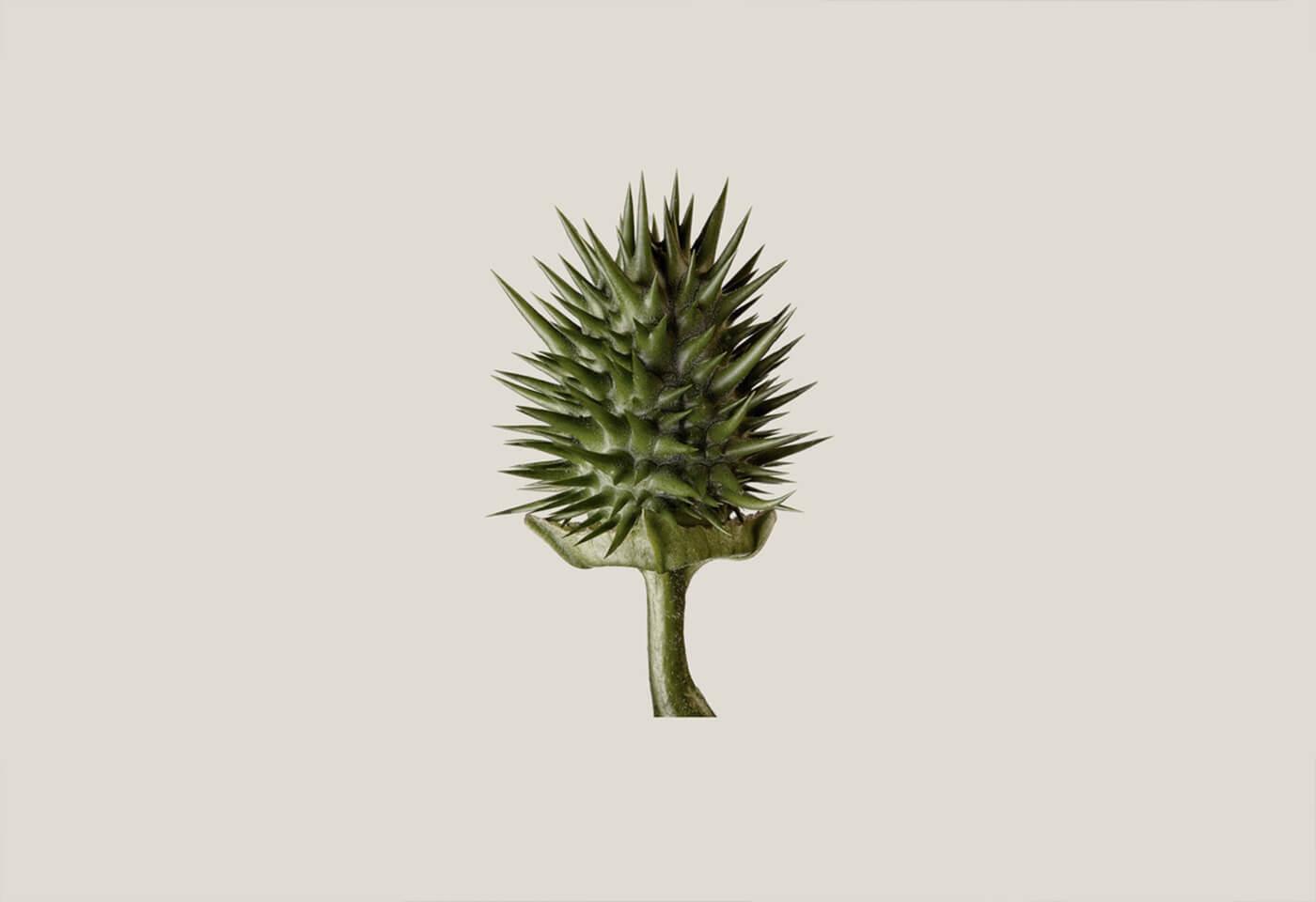 Macro image of plant