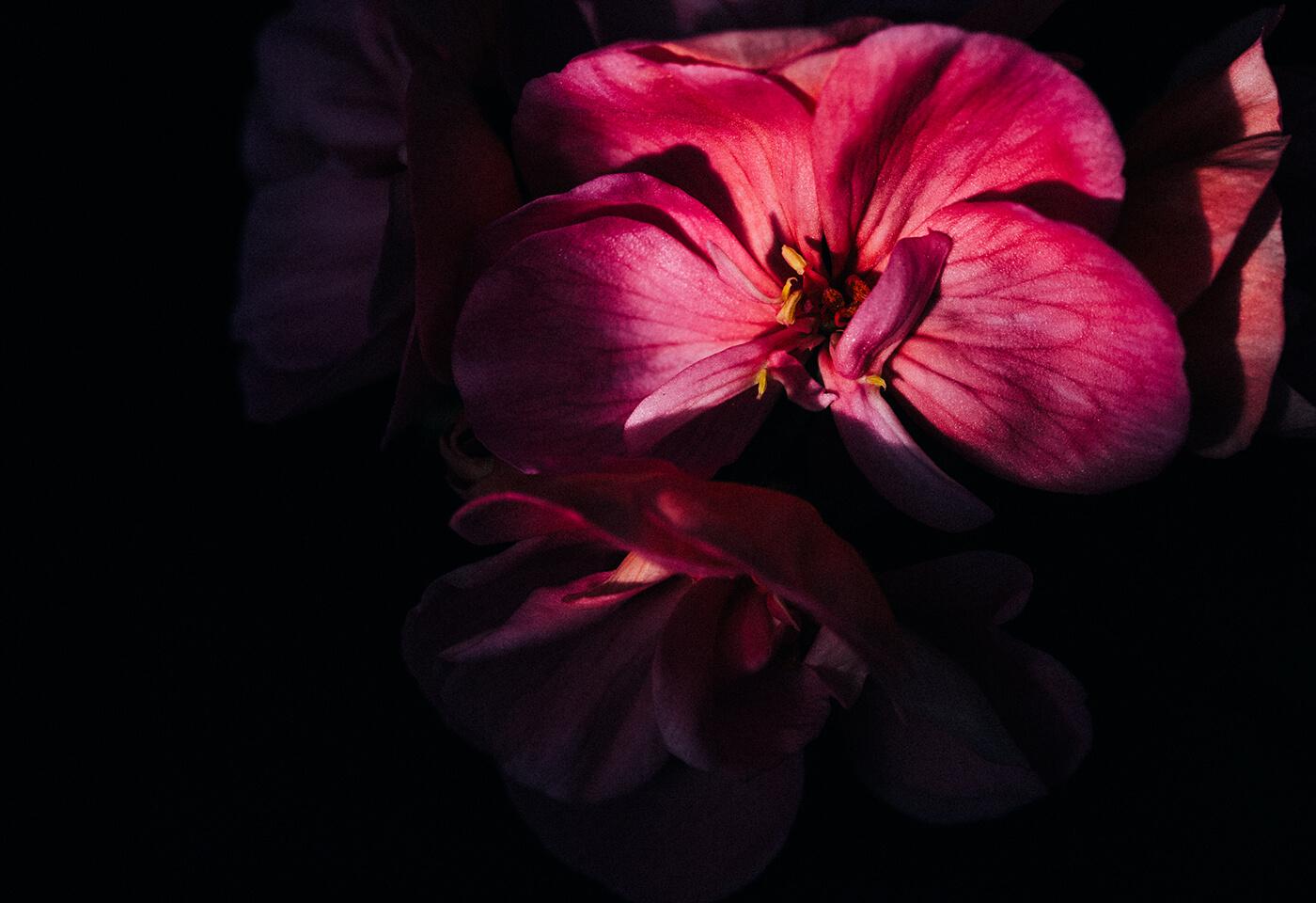 Landscape image of flower