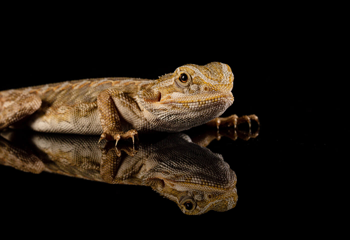 Image of a lizard by Jenn Cooper
