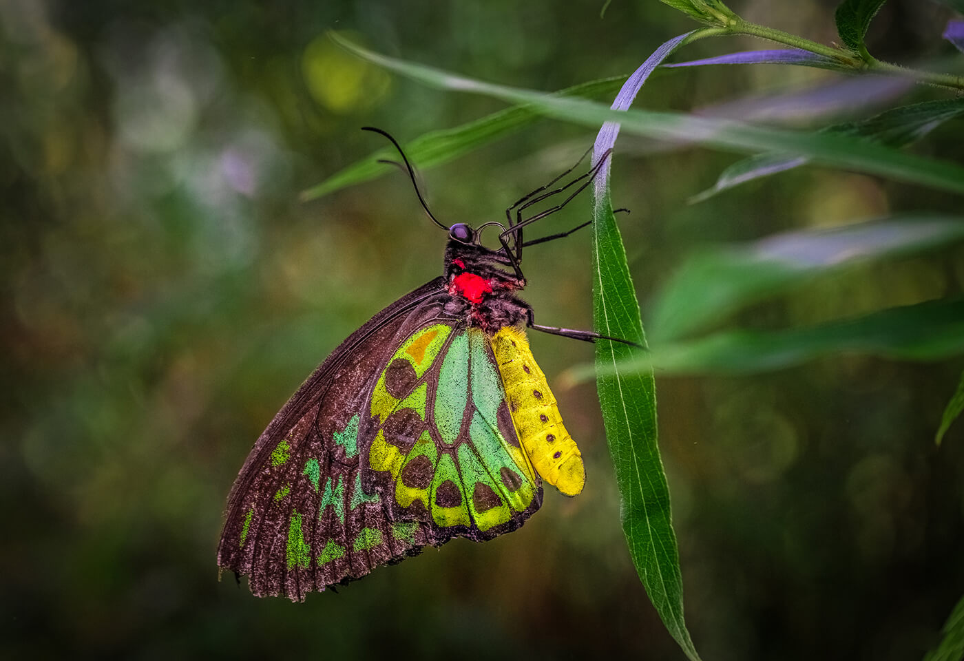 Macro image of butterfly by Greg Sullavan