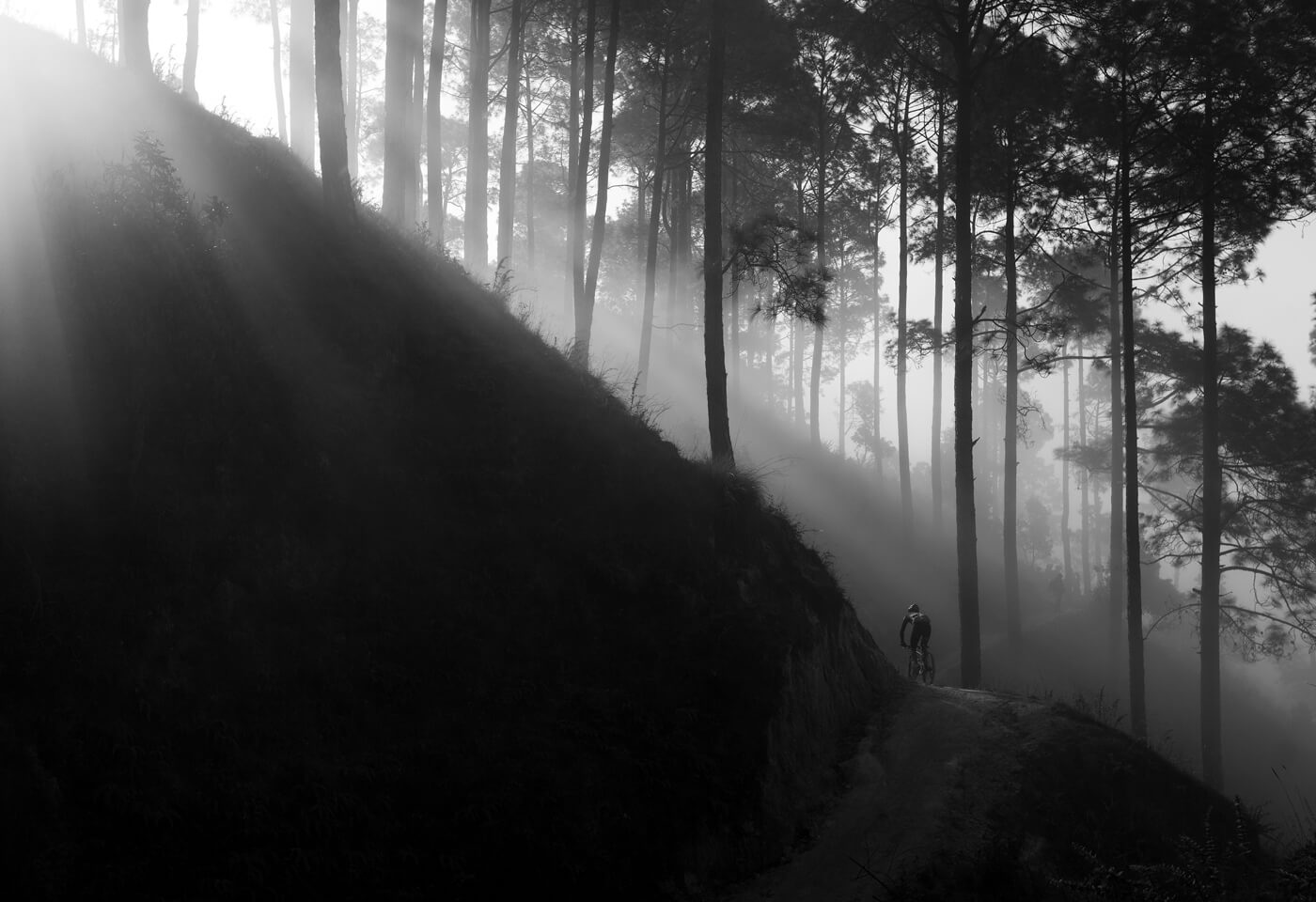 image of a forest in the outskirts of Kathmandu by Krystle Wright