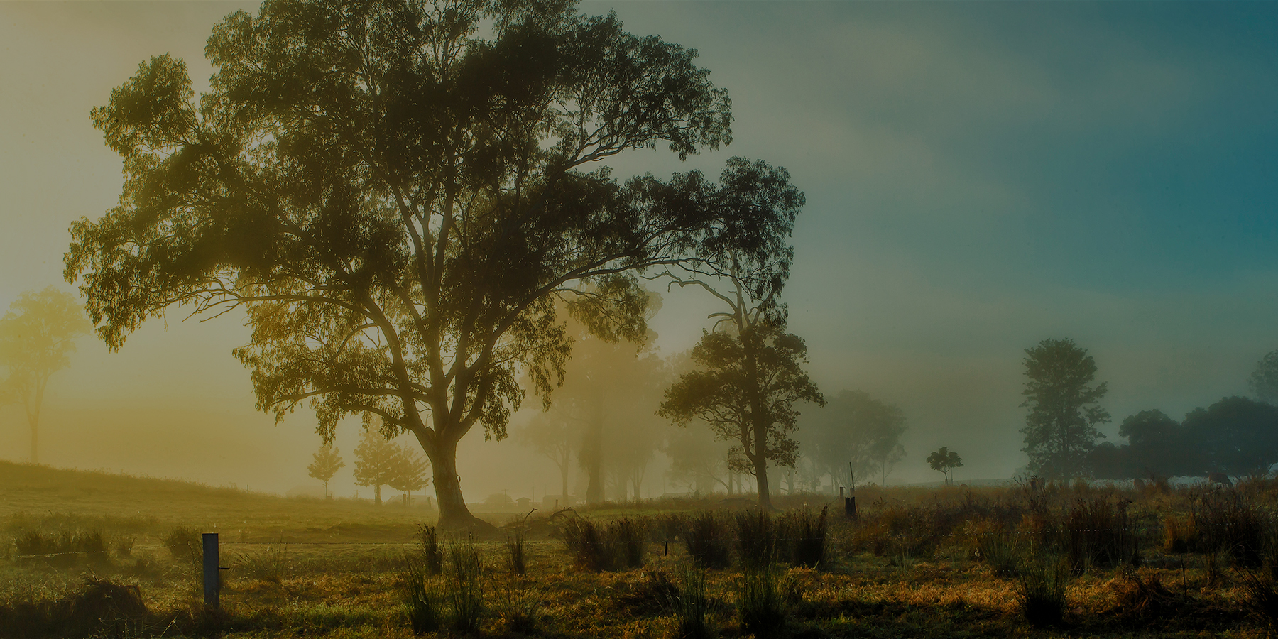 Photograph of a misty sunrise in the country