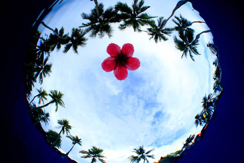 Image of palm trees and a flower taken using EF 8-15mm f/4L Fisheye USM