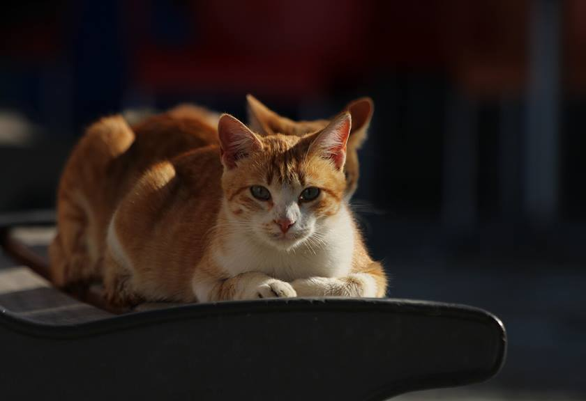 Portrait image of cat taken with EOS 1500D