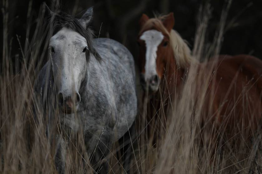 Two horses taken with Canon EOS-1DX Mark II DSLR camera
