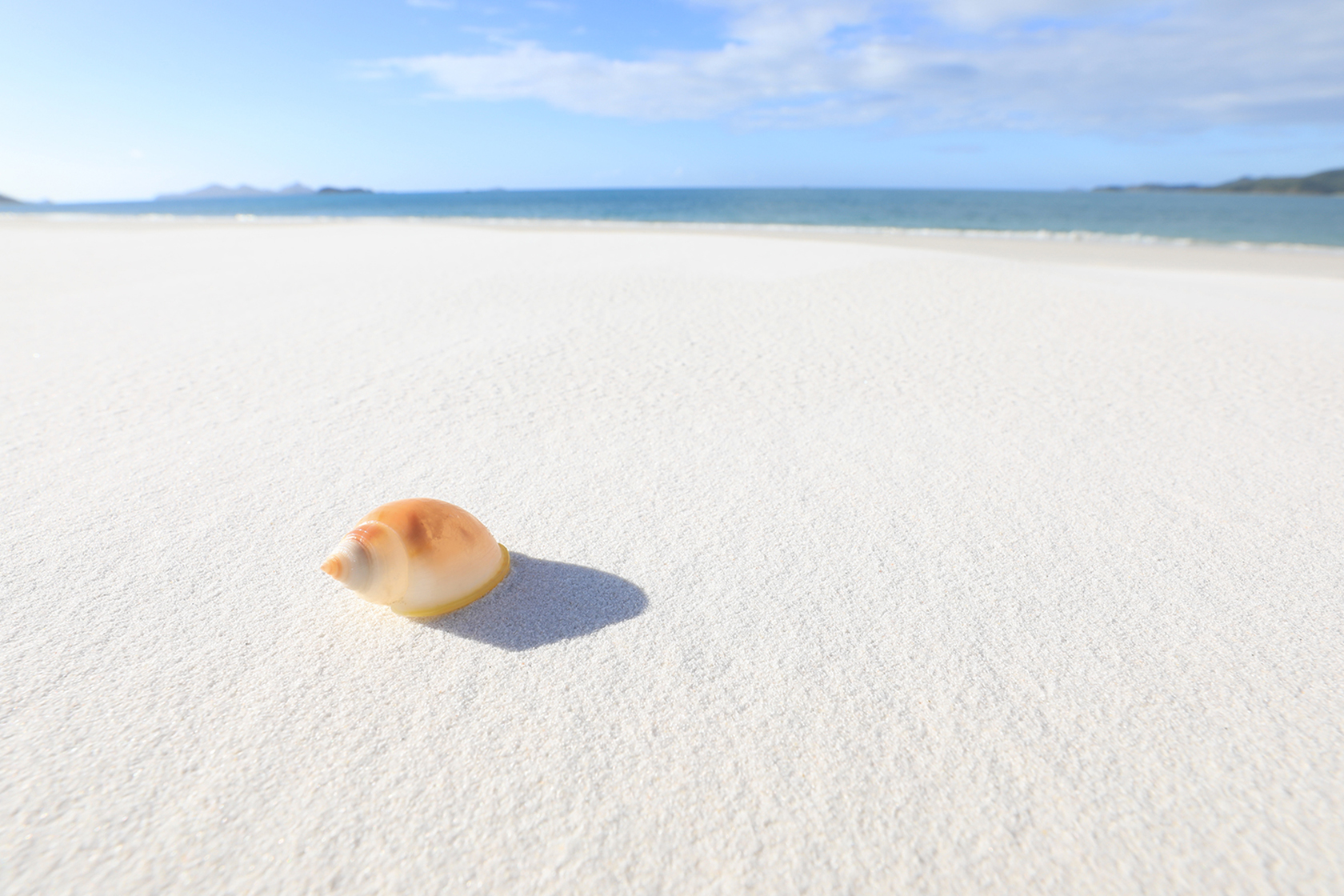 Shell on white sand