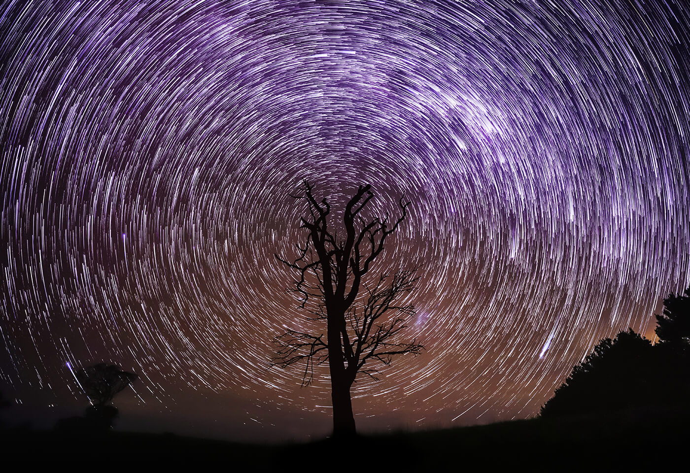 Long exposure image of star trails over silhouette of a tree - sample photo by Canon EOS 6D Mark II