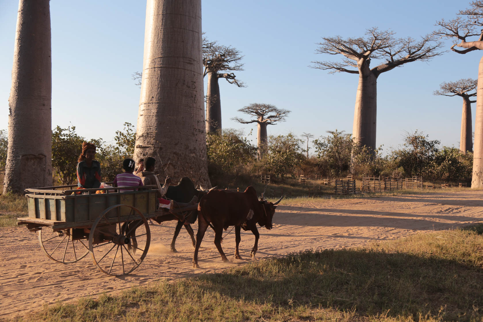 Women and horse drawn cart in Madagasgar taken with Canon EOS 6D DSLR camera