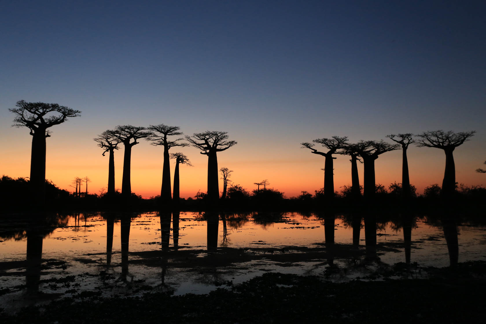 Madagasgar trees at sunset taken with Canon EOS 6D DSLR camera