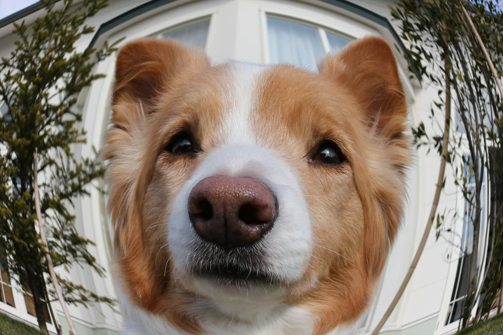 Dog close-up taken with Canon EOS 700D DSLR camera