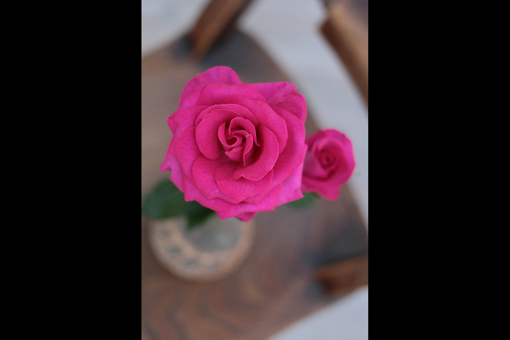 Pink rose taken with Canon EOS 70D DSLR camera