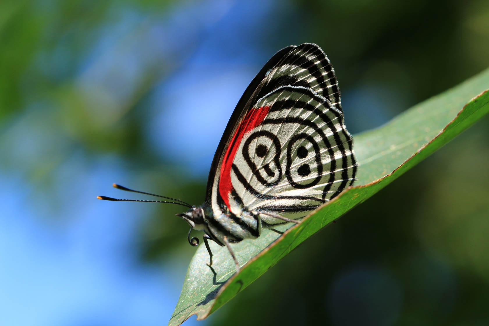 Butterfly close-up taken with Canon EOS 70D DSLR camera