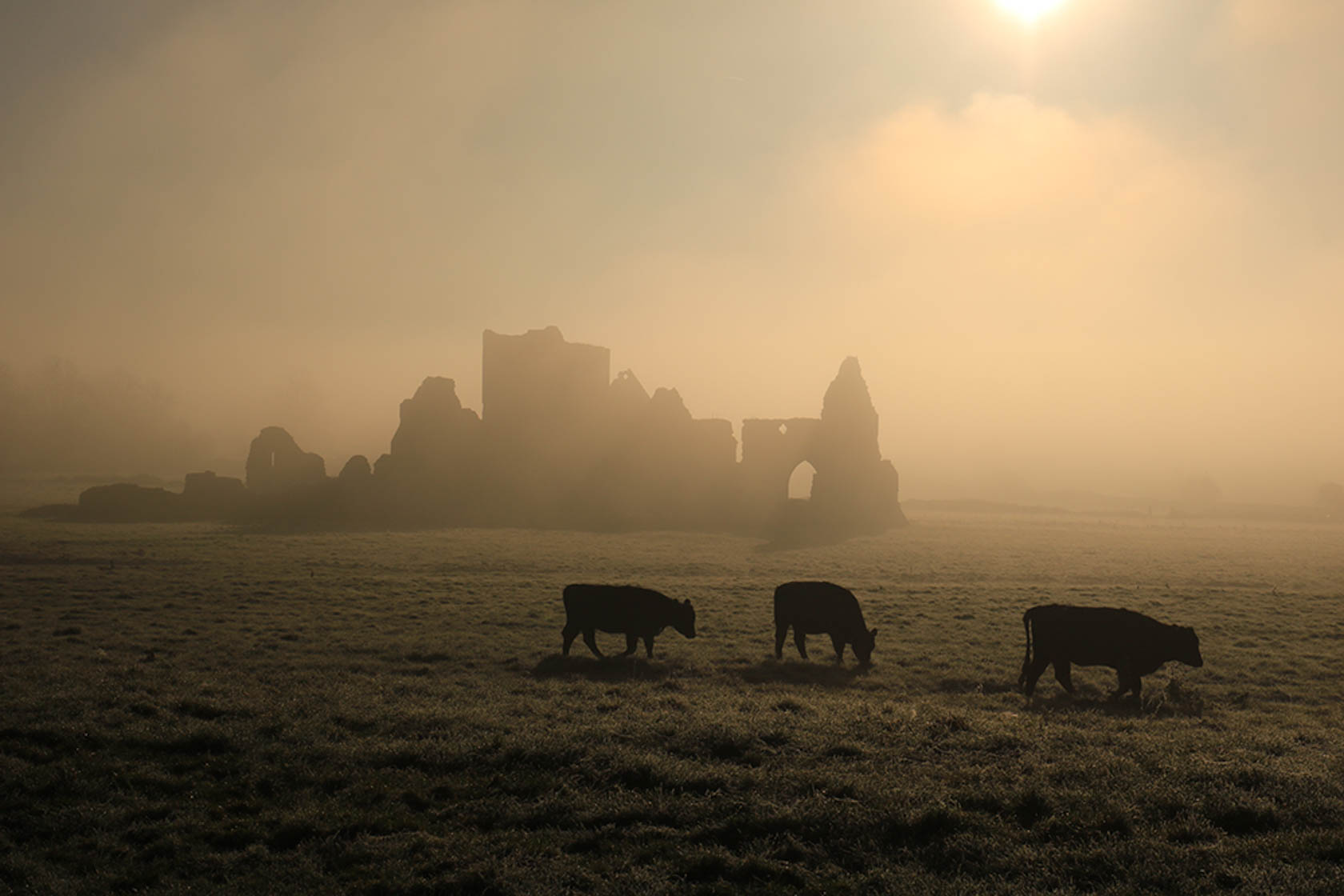 Cows in a field shrouded in mist with ruins in the background taken with the Canon EOS 750D digital SLR camera