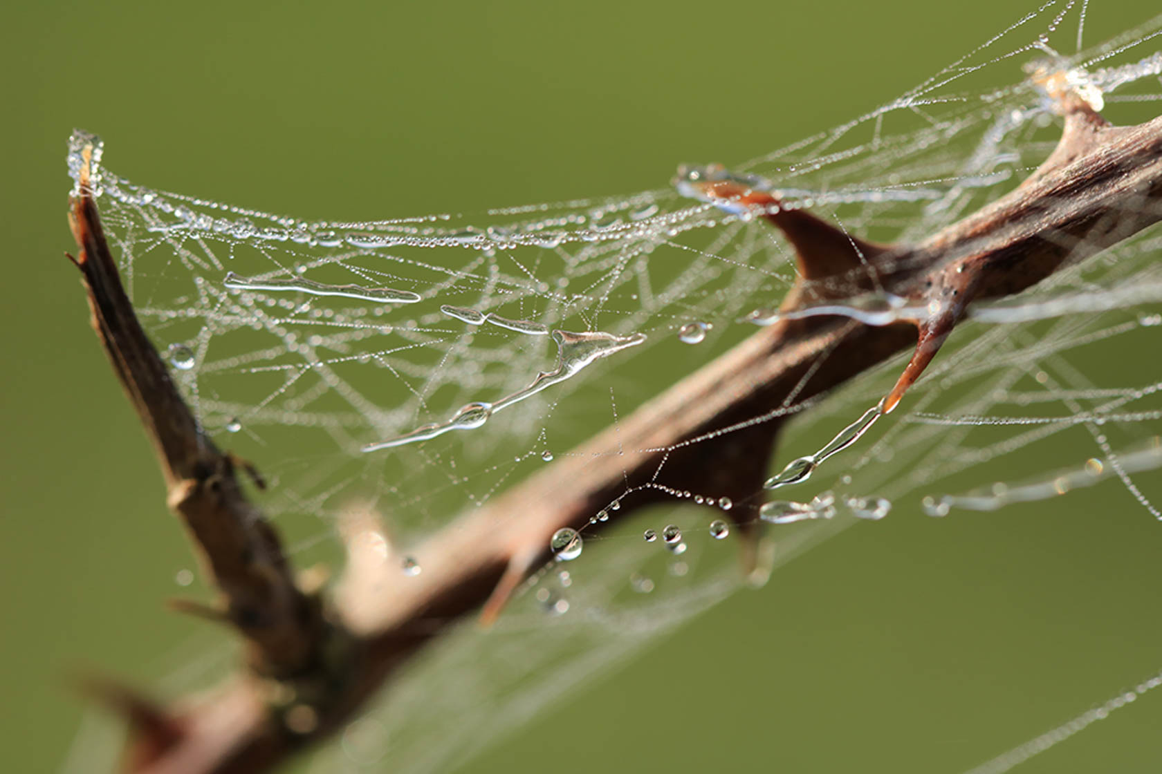Spider web with water droplets taken with the Canon EOS 760D digital SLR camera