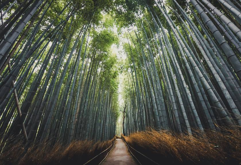 Photo of bamboo trees taken with the EOS R