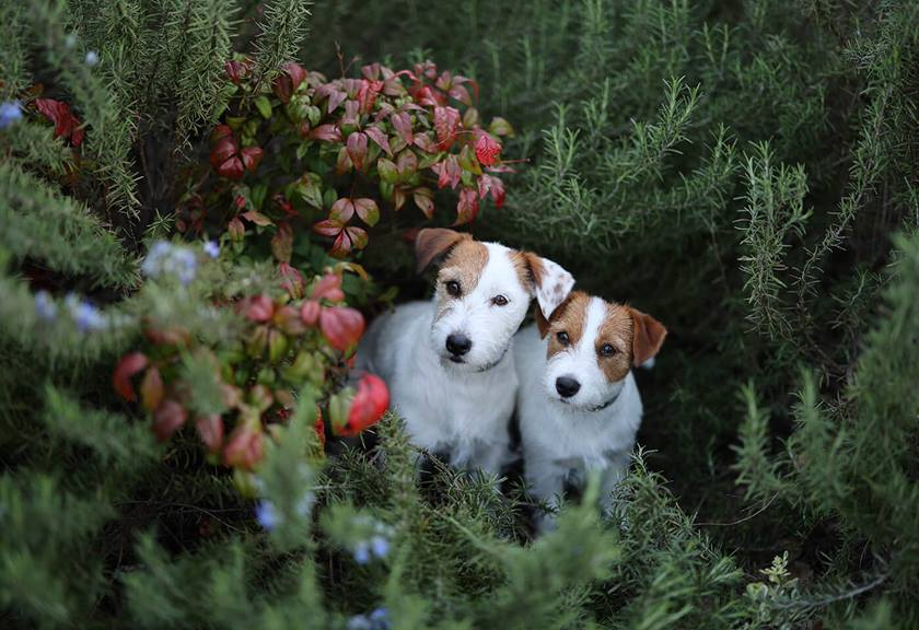 Image of dogs surrounded by plants taken using EOS R6