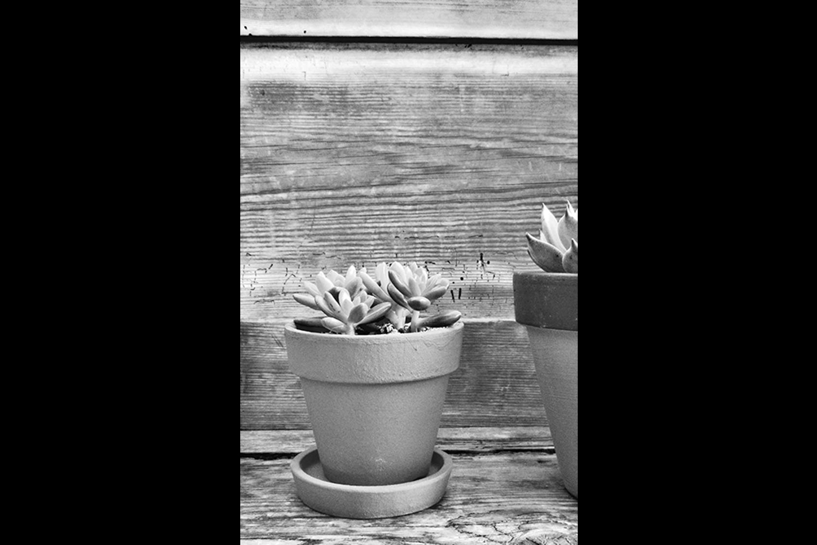Succulent in black and white taken with Canon IXUS 285 HS digital compact camera