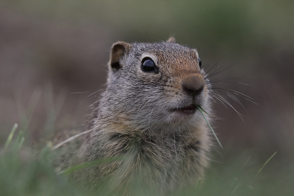 Macro image of squirrel taken on EOS 5D Mark IV