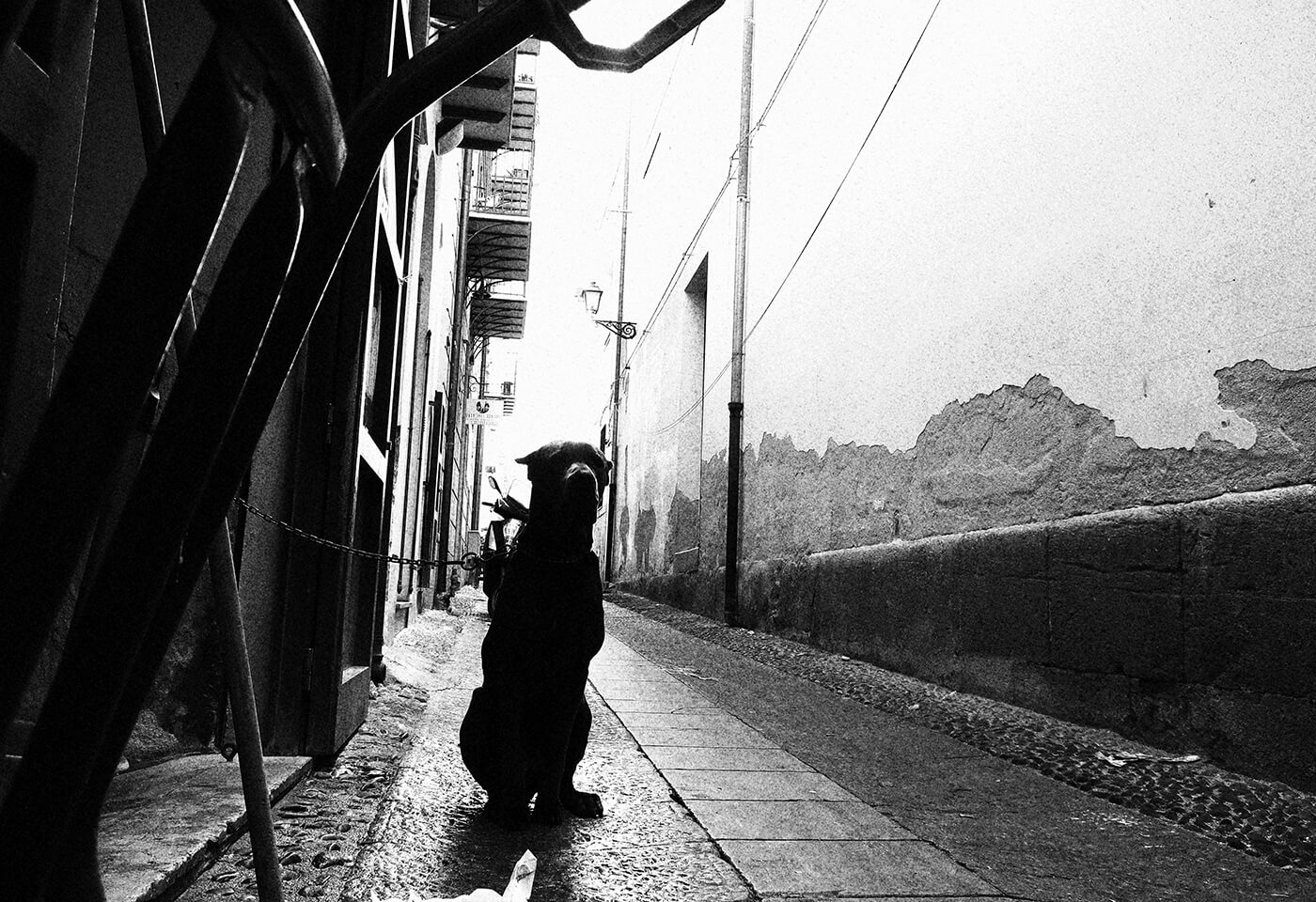 Black and white Image of dog in laneway