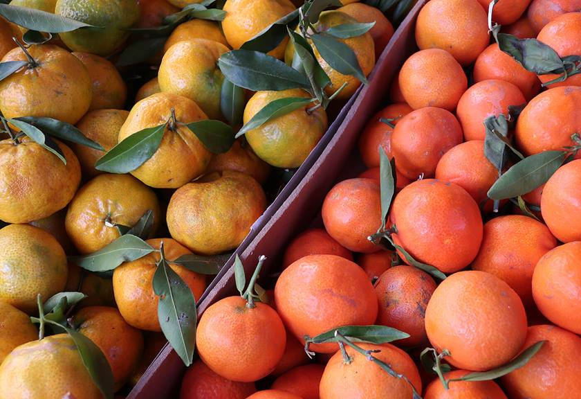 Image of oranges and lemons