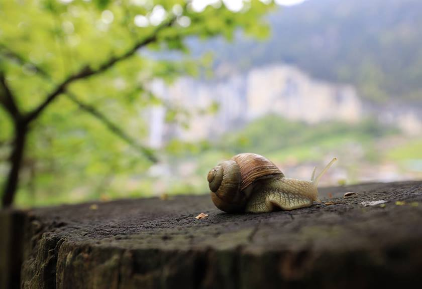 Image of snail taken with a RF 15-35mm F2.8 L IS USM lens