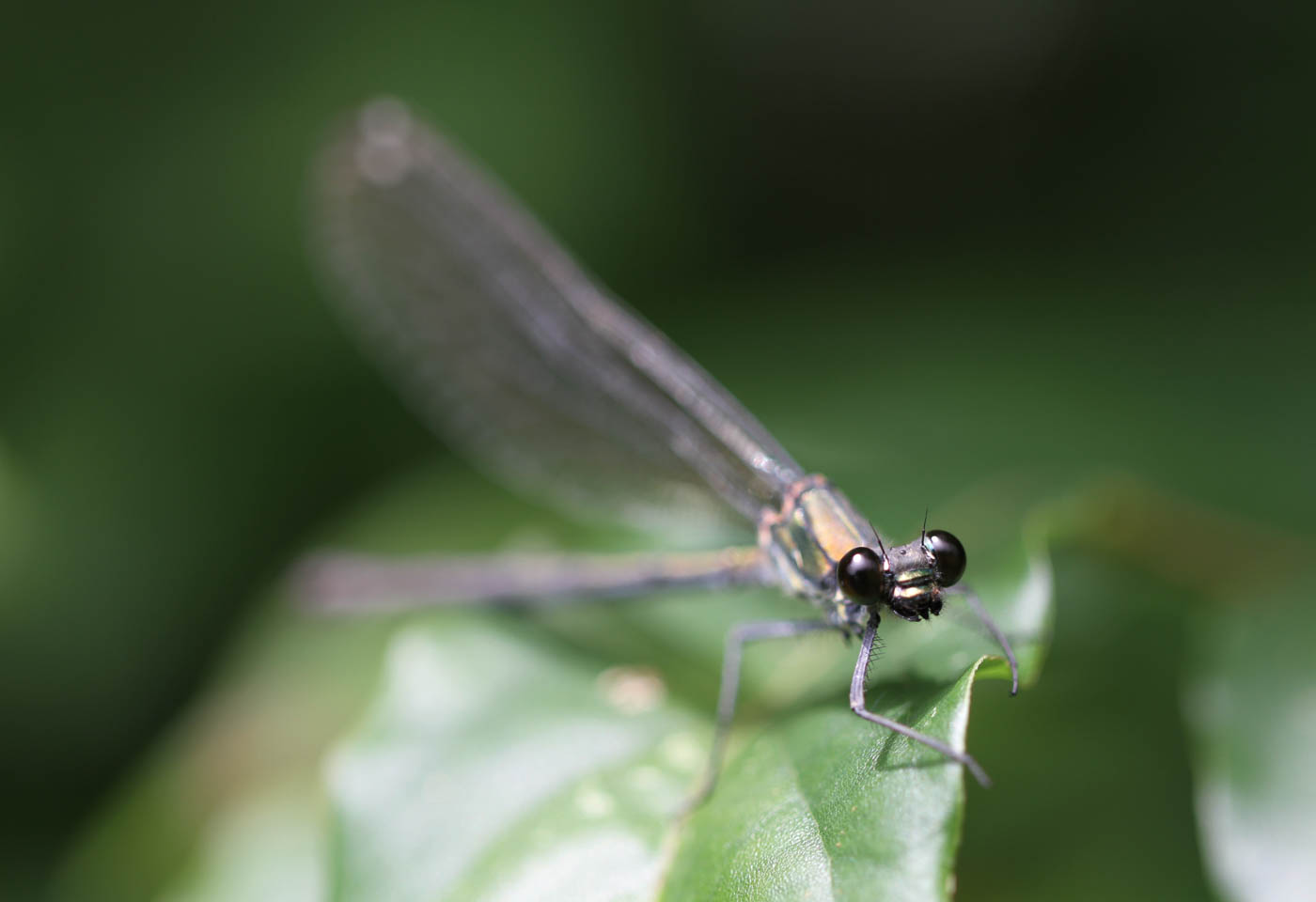 Close up of a dragonfly on leaf