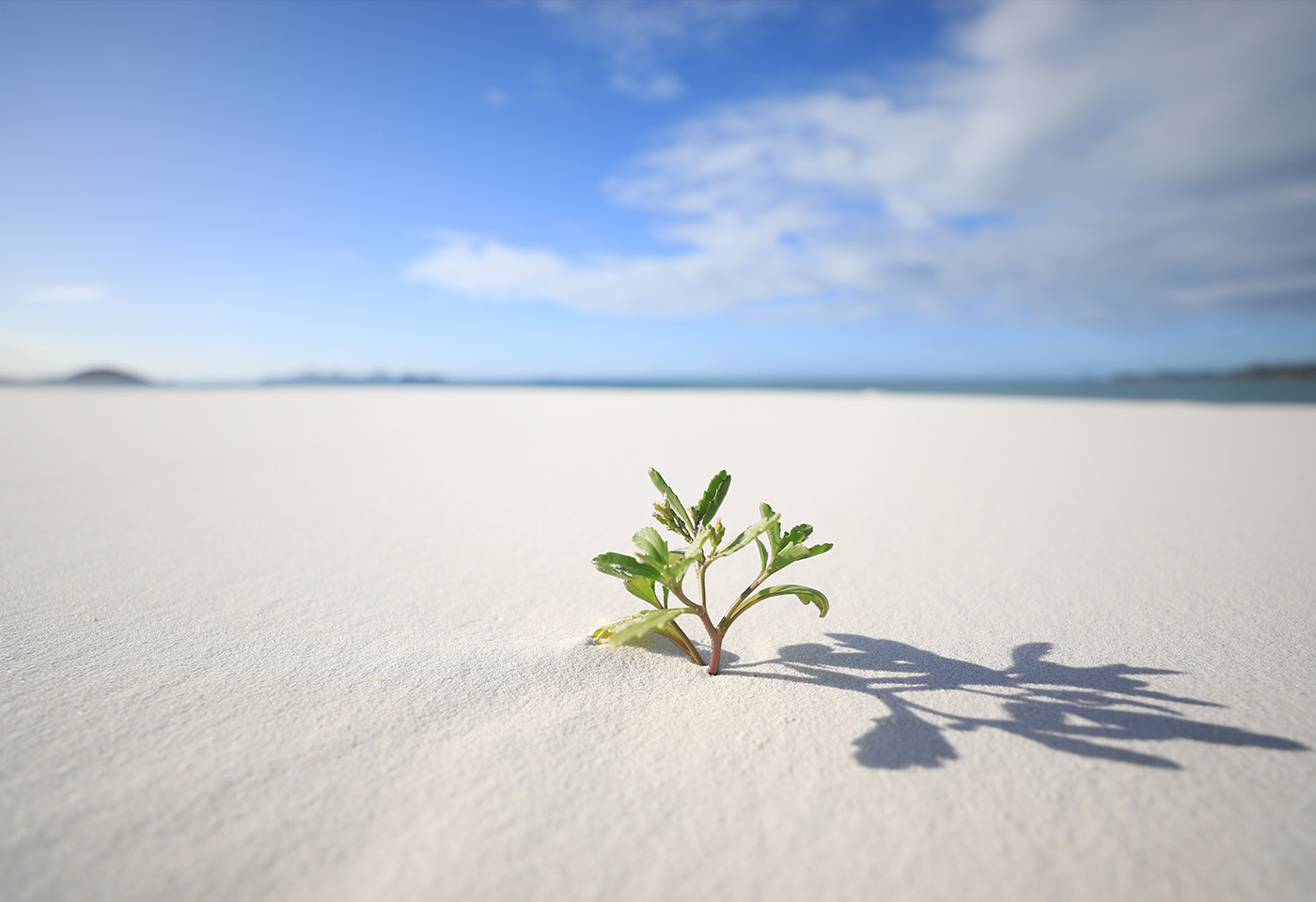 Small plant in sand