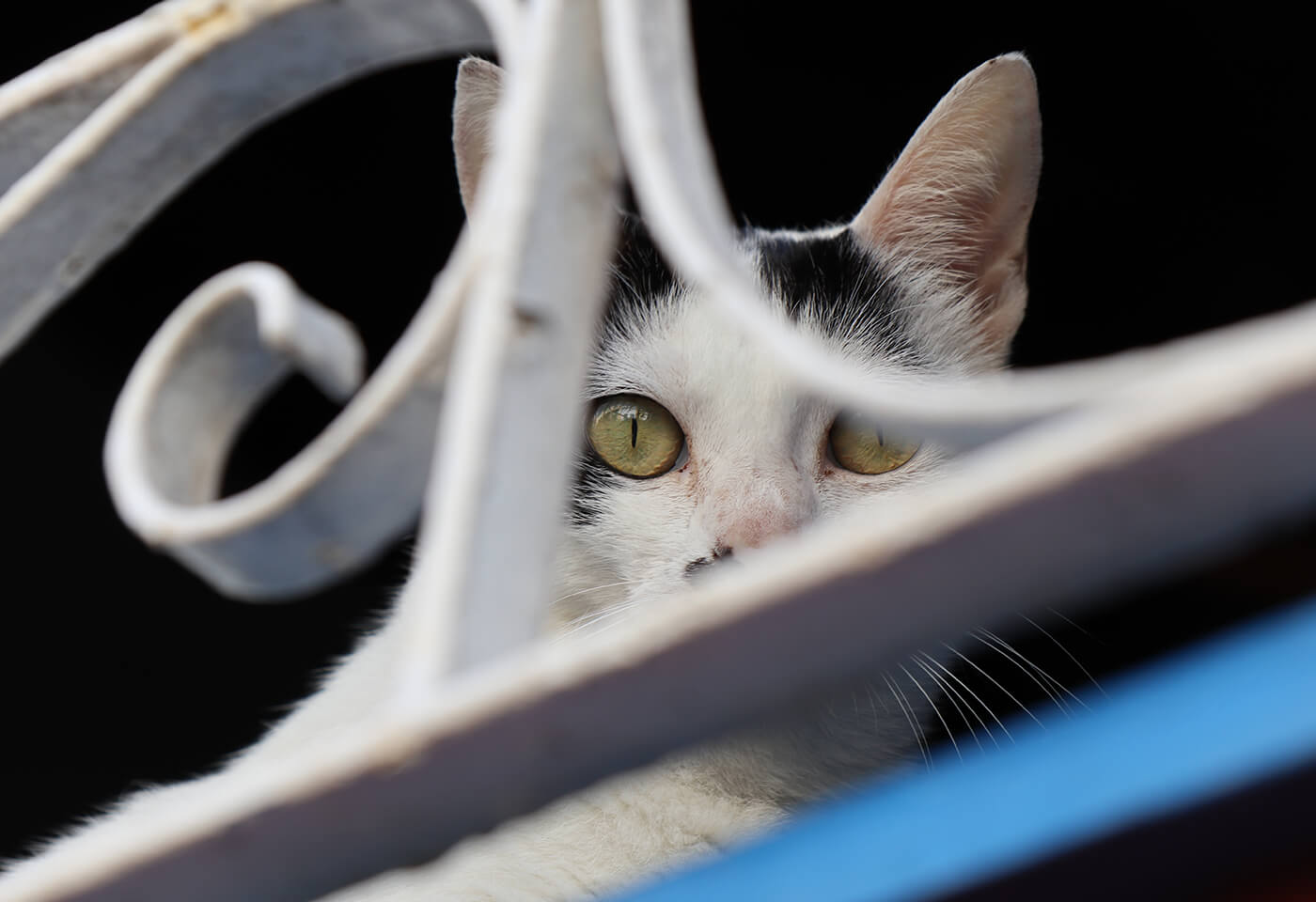 Cat behind a fence
