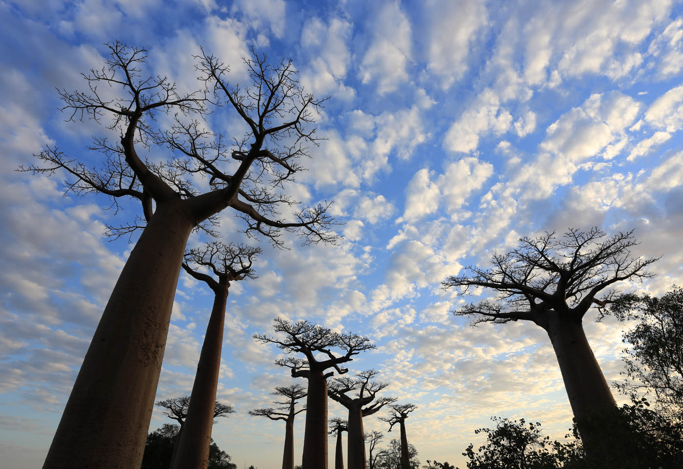 Wide angle shot of trees in Madagasgar taken with Canon EOS 6D DSLR camera