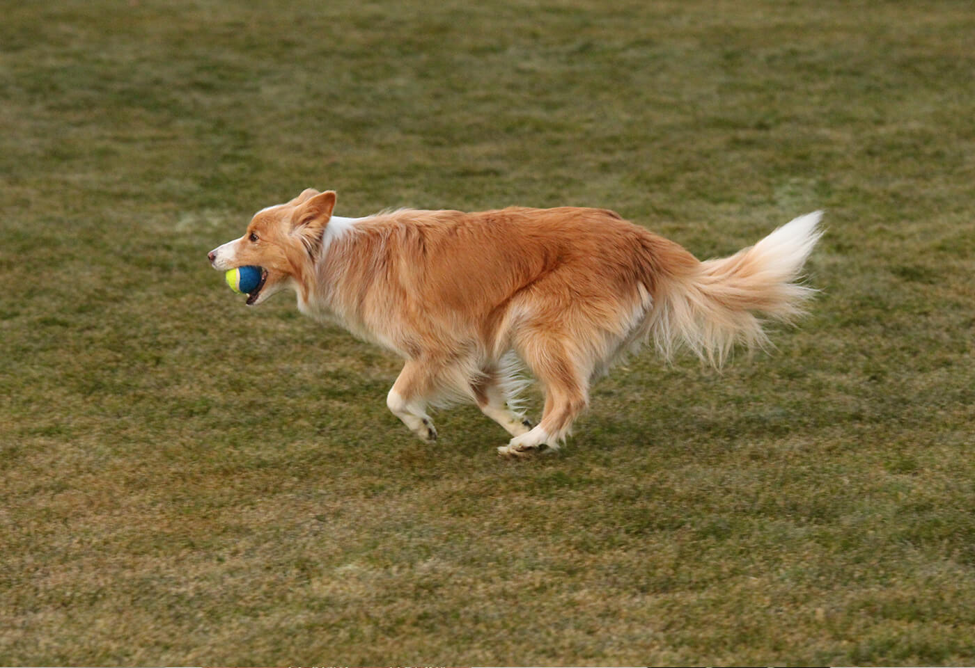Dog with ball in mouth taken with Canon EOS 700D DSLR camera