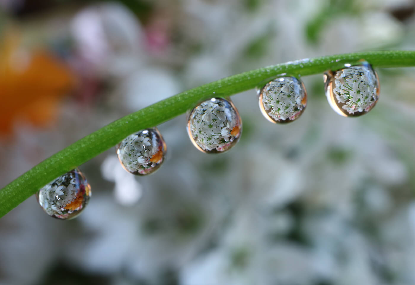 Close up of raindrops on a flower stem