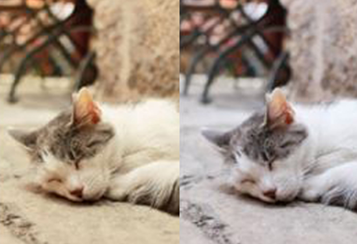 image of a cat with two different filters