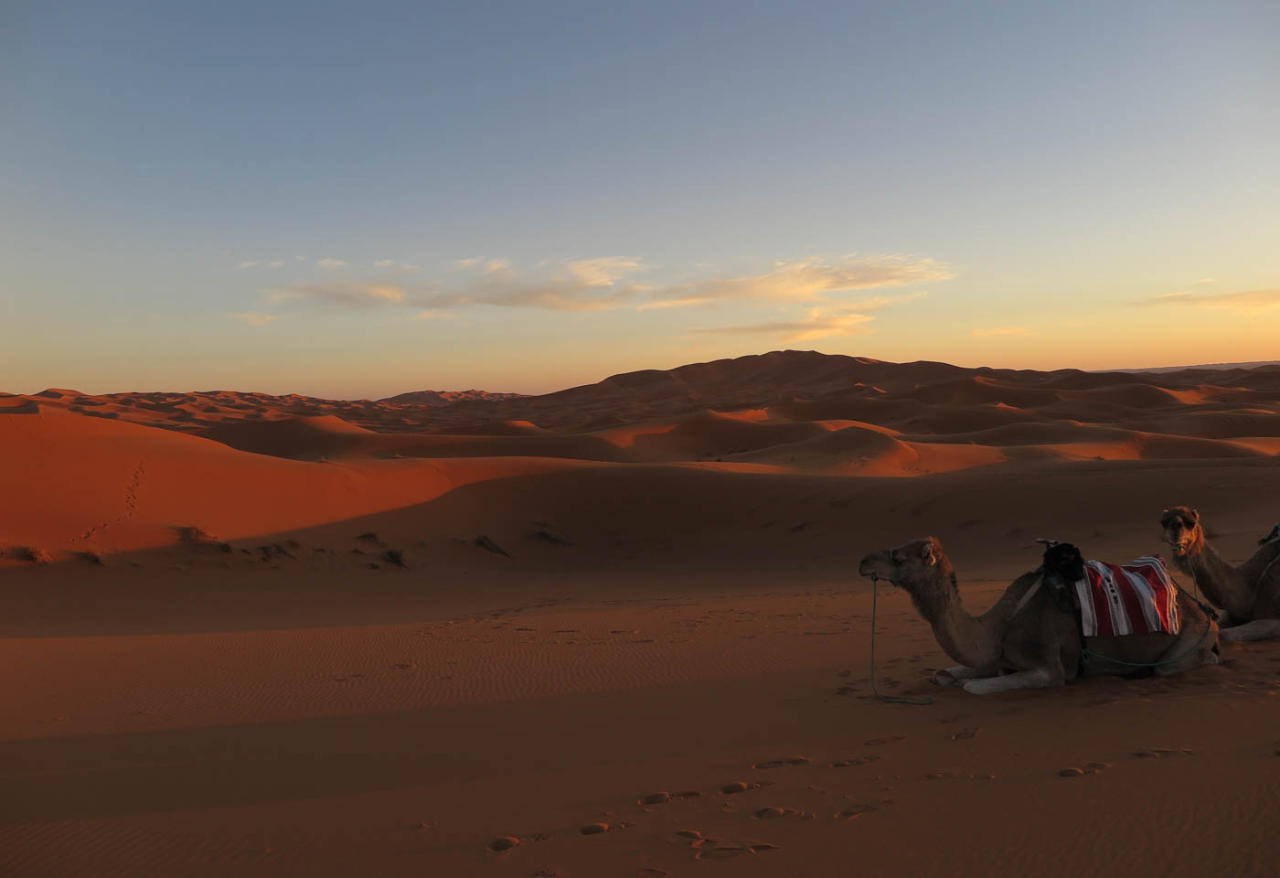Camel in the desert, taken with the Canon PowerShot G1X Mark II camera