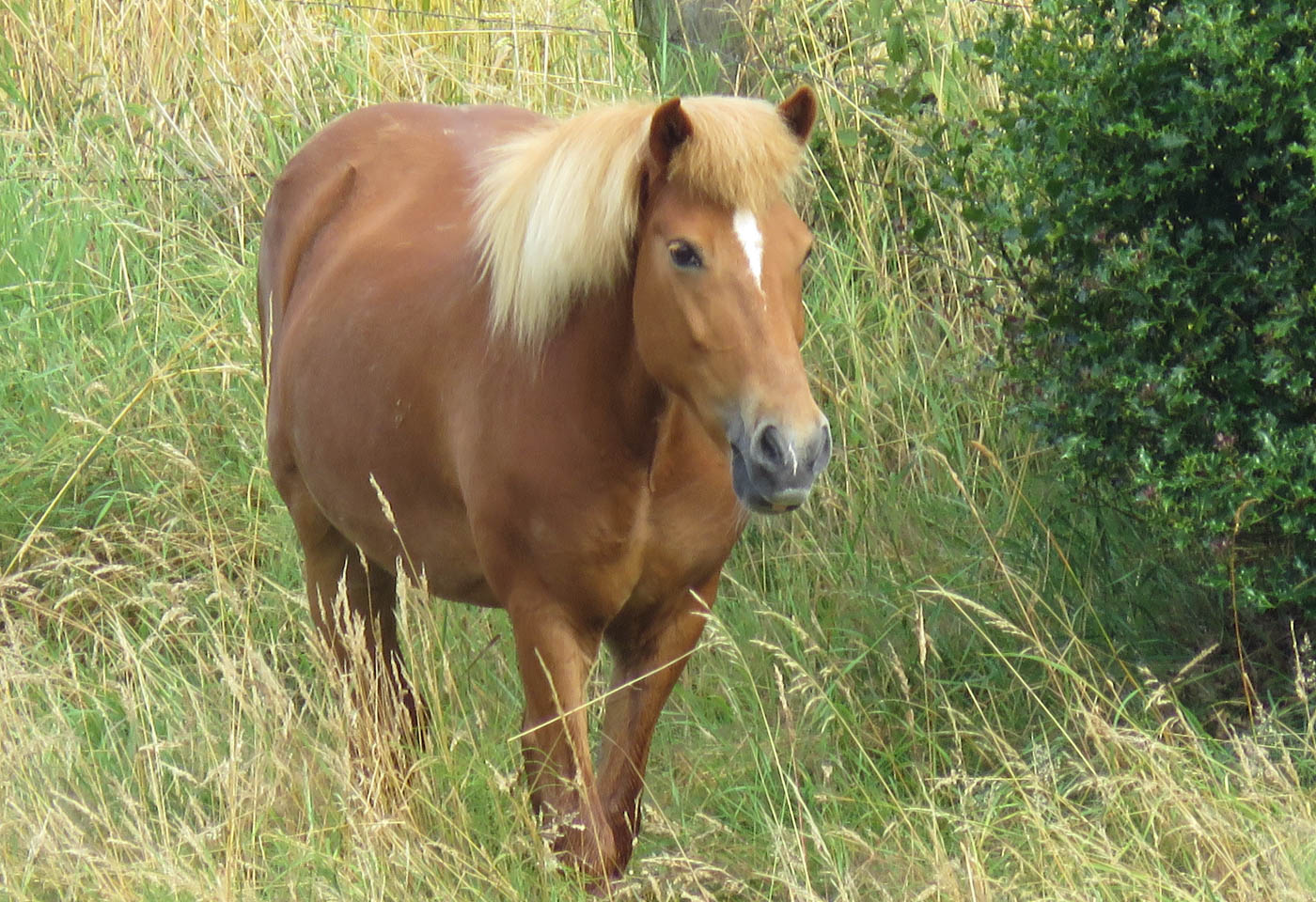 Horse in the grass, taken with the Canon PowerShot SX60 HS digital camera