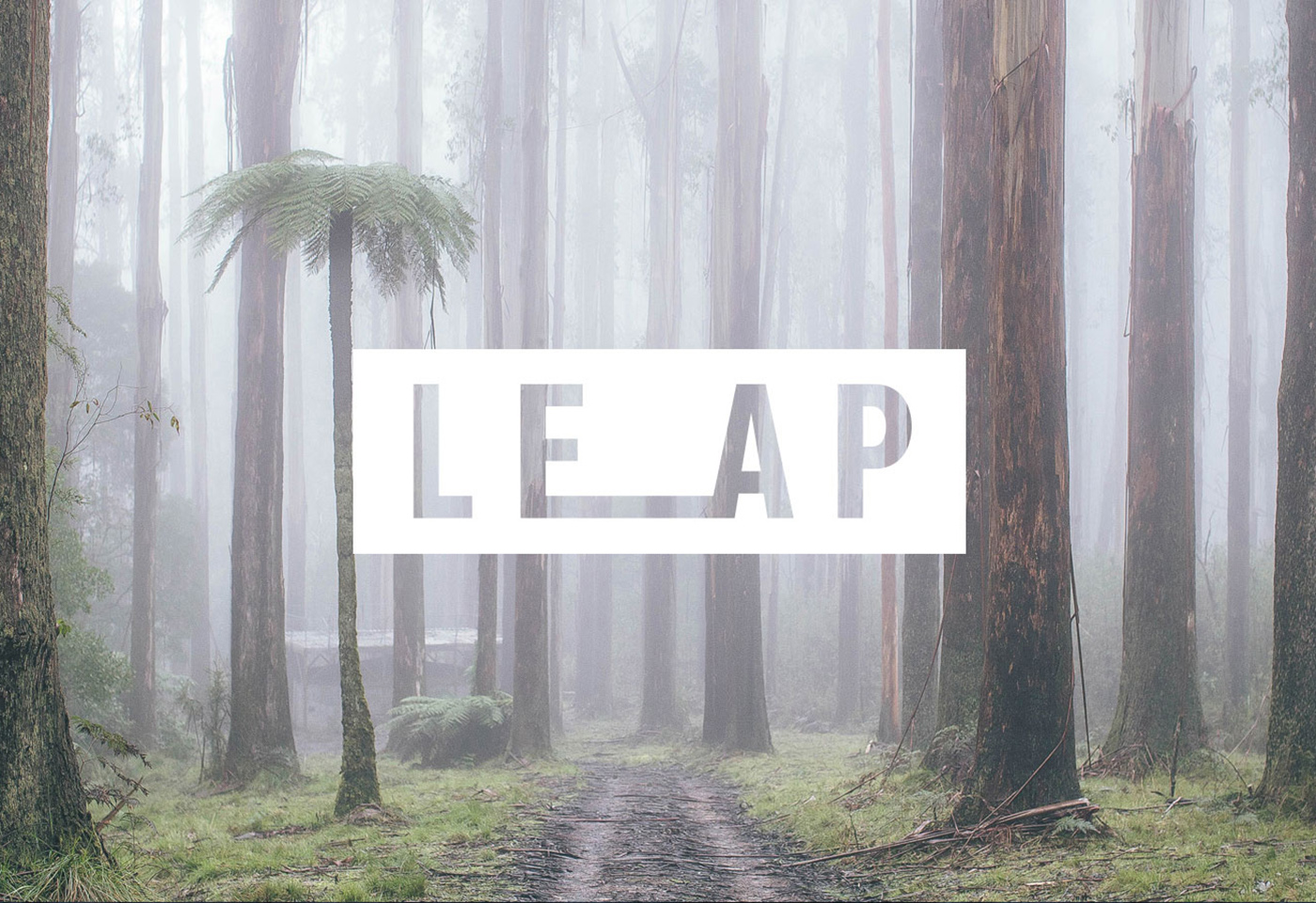 Foggy forest landscape image for LEAP by Julian Lallo