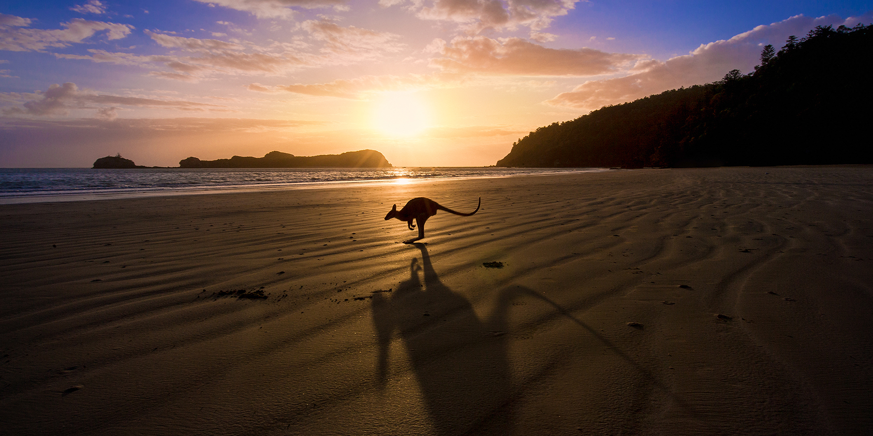 Sunset landscape image of kangaroo on the beach by Greg Sullavan