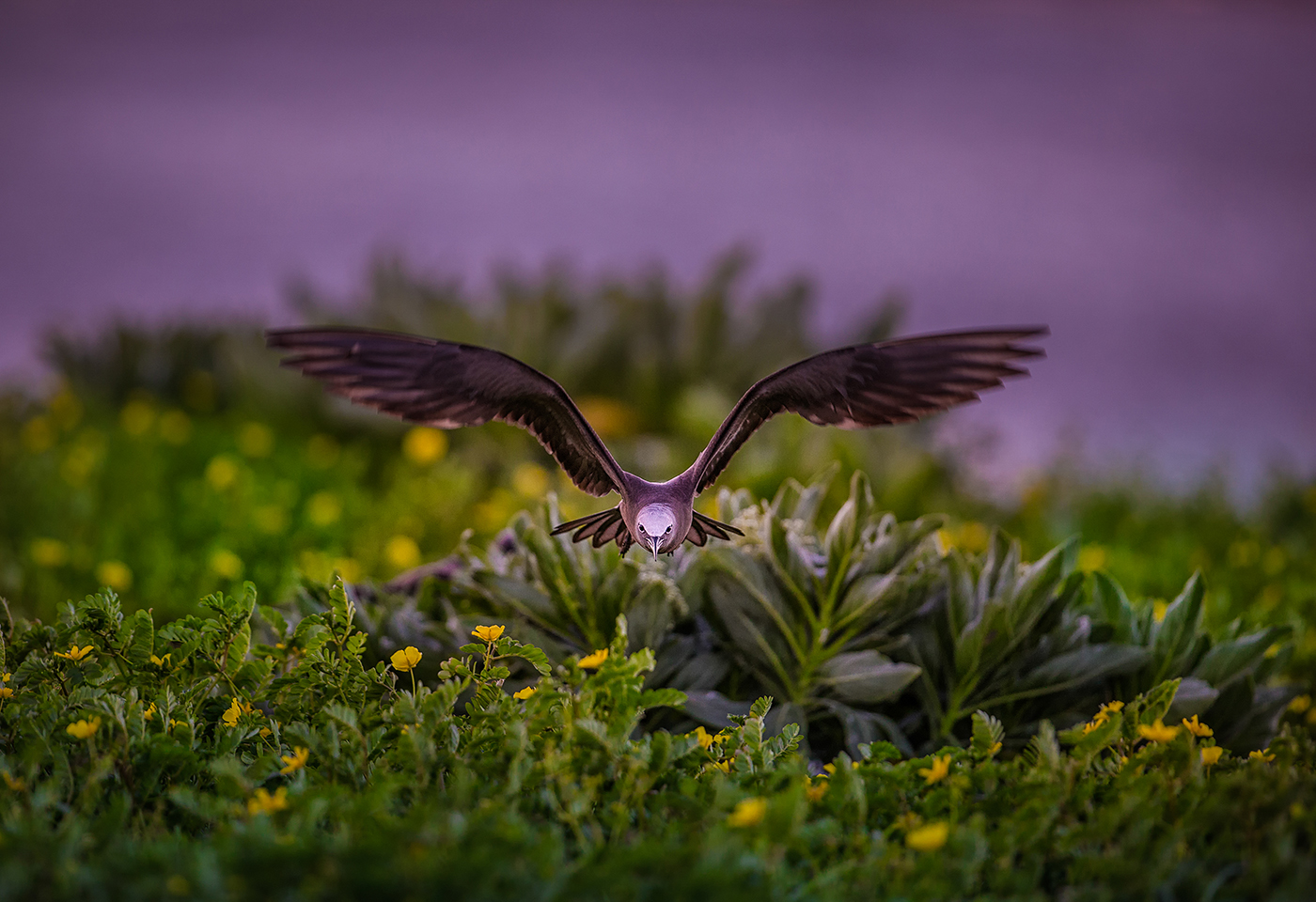 Image of bird in flight