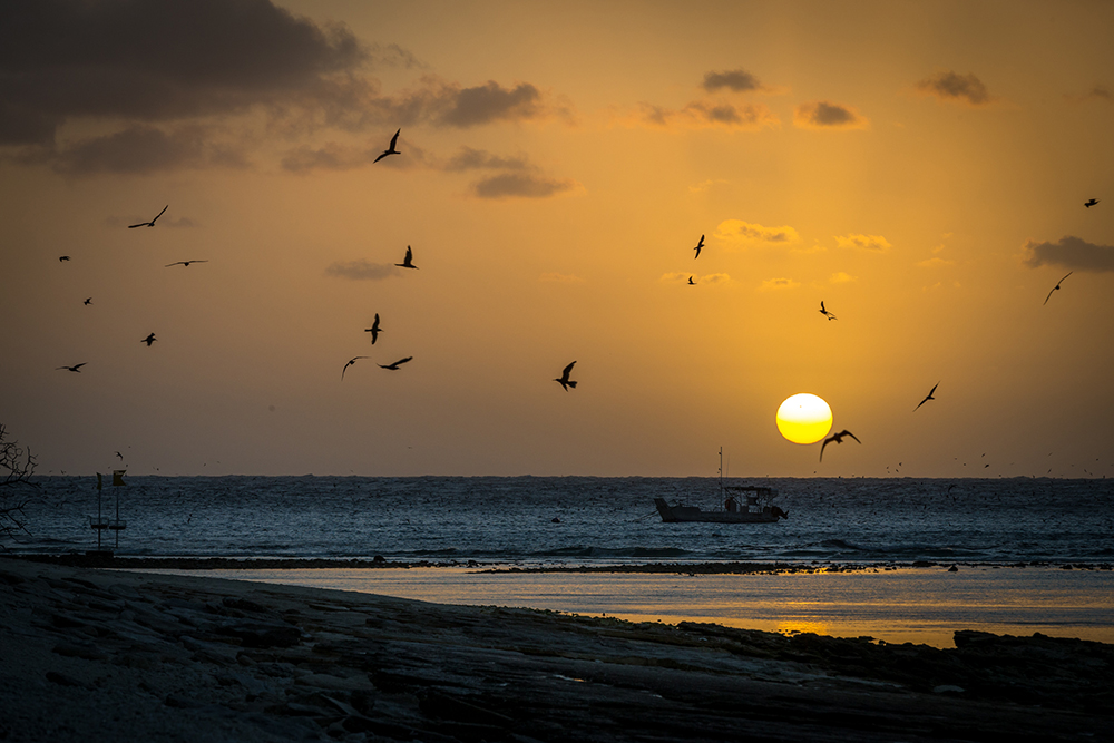 landscape image of sunset and birds