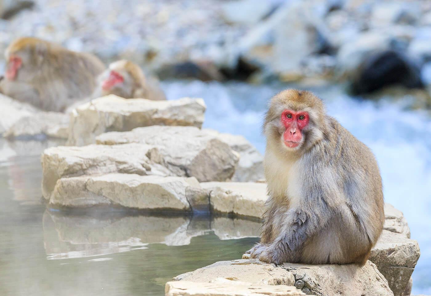 Portrait image of Monkey