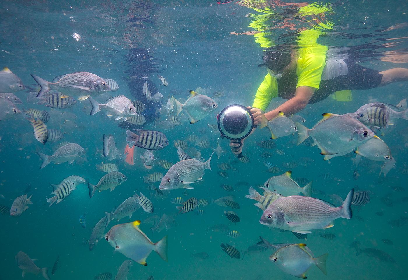Underwater fish photographer image Moreton Island