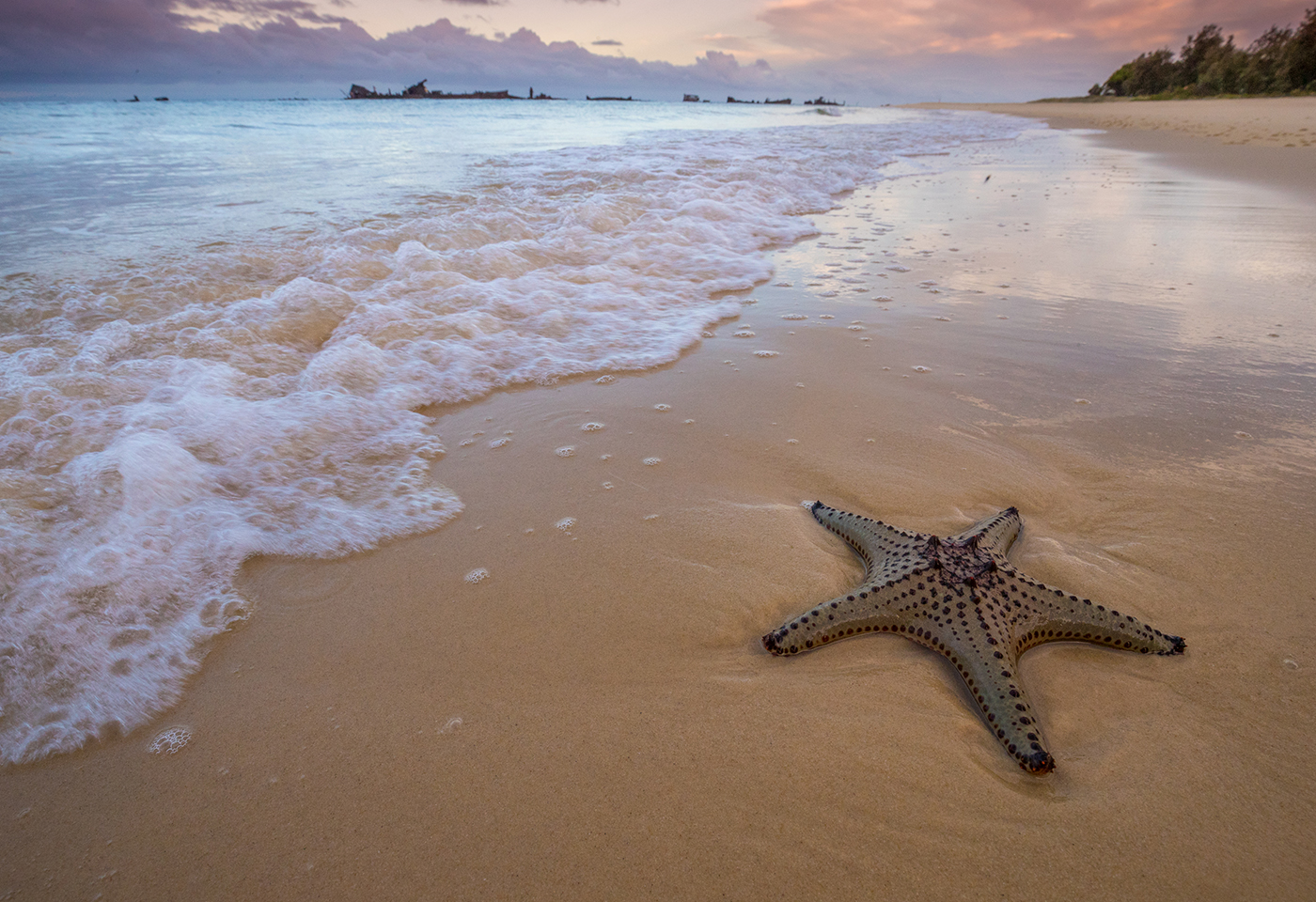 beach starfish shore image